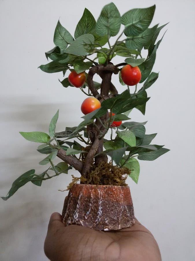 φυτό φοινικών στοκ εικόνες