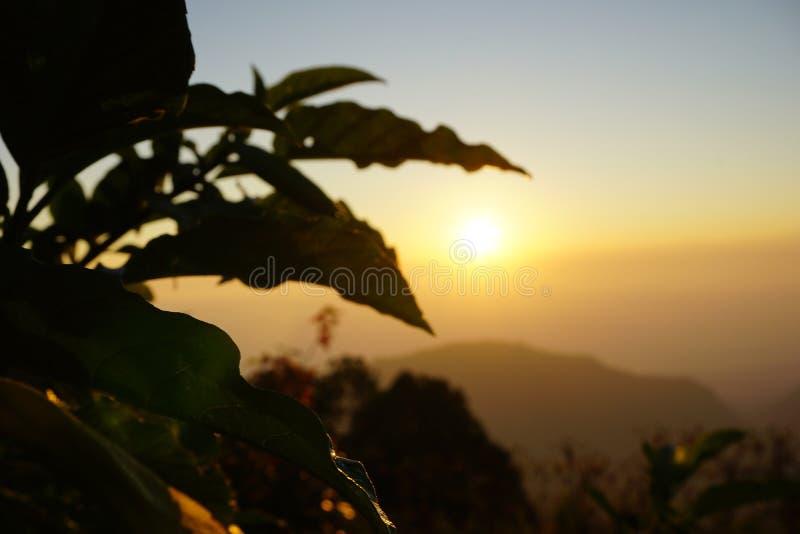 Φυτό φύλλων σκιαγραφιών στο ηλιοβασίλεμα στη βόρεια Ταϊλάνδη στοκ φωτογραφίες με δικαίωμα ελεύθερης χρήσης
