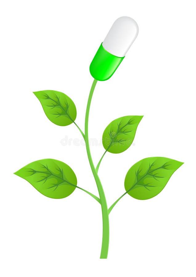 φυτό χαπιών φύλλων διανυσματική απεικόνιση