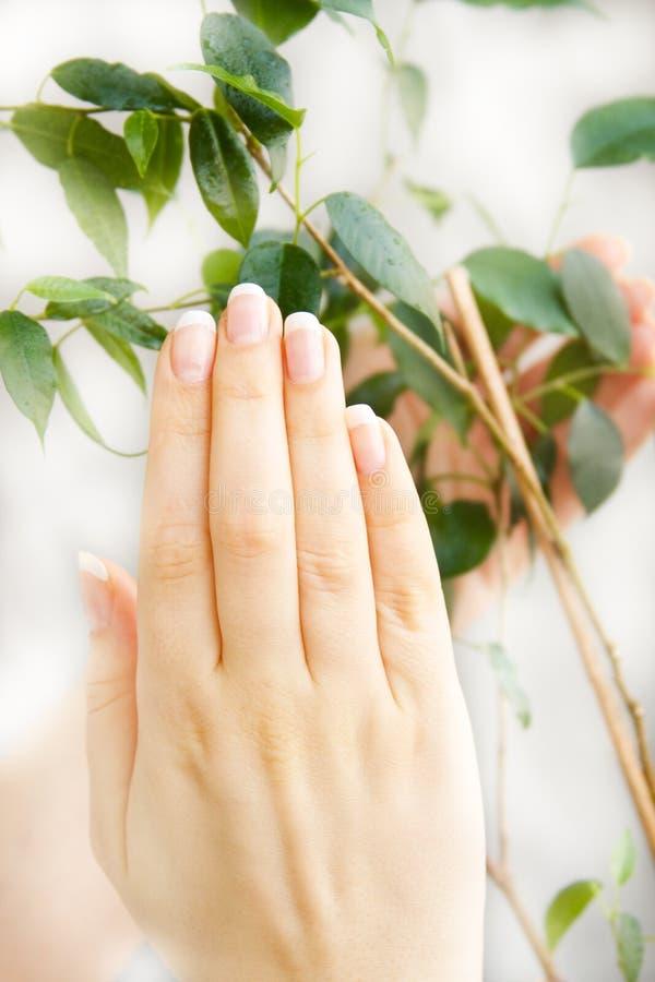 φυτό χεριών στοκ φωτογραφίες με δικαίωμα ελεύθερης χρήσης