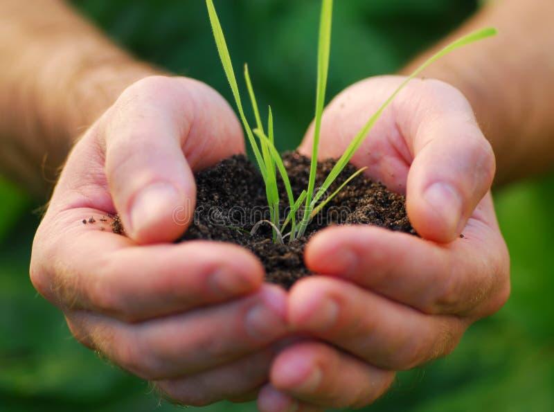 φυτό χεριών στοκ φωτογραφία με δικαίωμα ελεύθερης χρήσης
