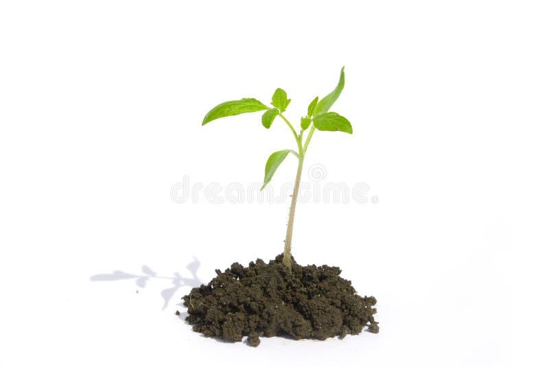 φυτό στοκ εικόνες