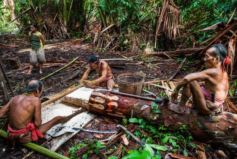 Φυλή Mentawai ατόμων στη ζούγκλα που συλλέγει τις εγκαταστάσεις στοκ εικόνες με δικαίωμα ελεύθερης χρήσης