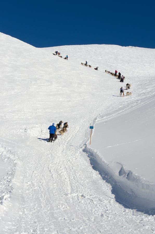 Φυλή Sleddog στις Άλπεις Όλη την ώρα ανηφορικά στοκ εικόνα με δικαίωμα ελεύθερης χρήσης
