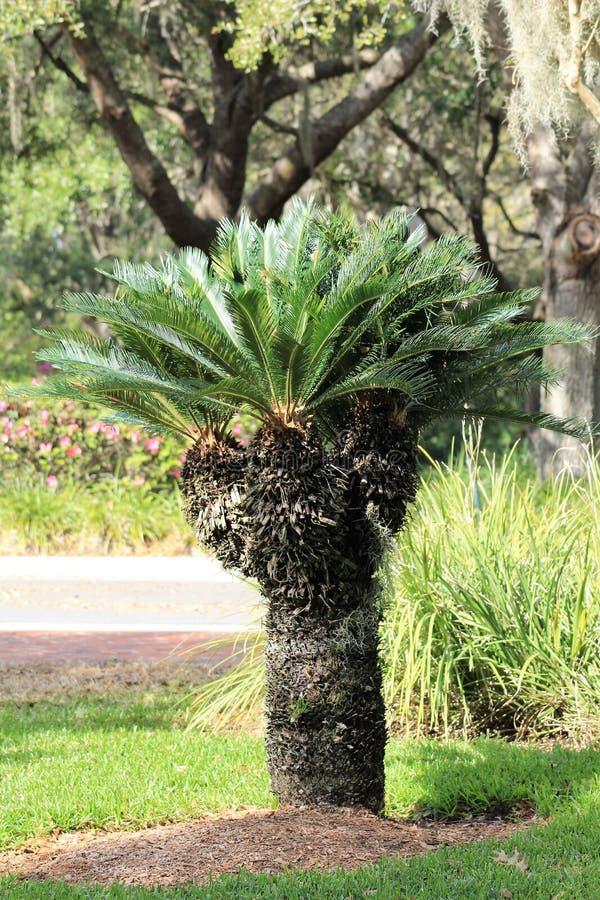φυλλώδες δέντρο στοκ φωτογραφίες
