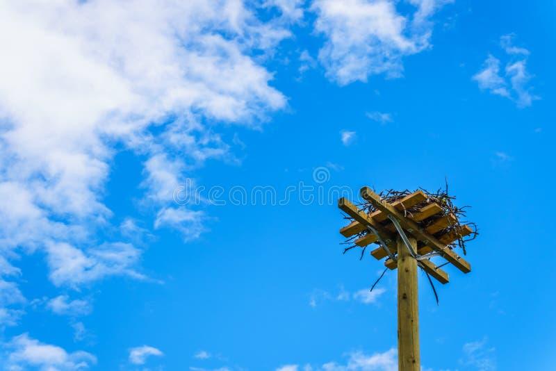 Φωλιά γερακιών Osprey ή ψαριών φιαγμένη από κλαδίσκους και κλάδους σε έναν ψηλό πόλο κατά μήκος του δρόμου Coldwater κοντά σε Mer στοκ φωτογραφία με δικαίωμα ελεύθερης χρήσης