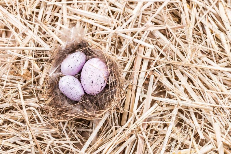 Φωλιά με τρία χρωματισμένα αυγά στο άχυρο στοκ φωτογραφίες