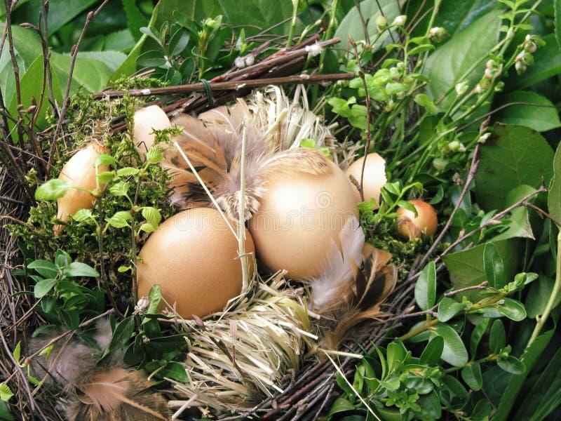 φωλιά πουλιών Στοκ εικόνες με δικαίωμα ελεύθερης χρήσης