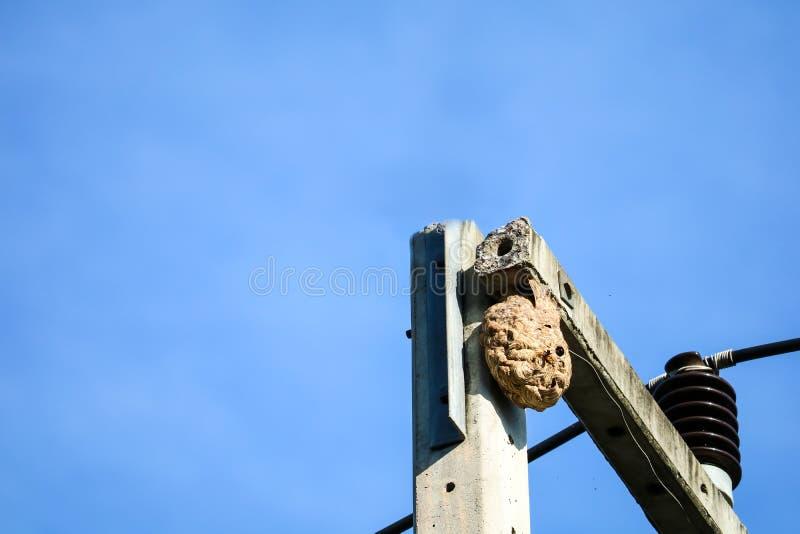 Φωλιά σφηκών πάνω από τον ηλεκτρικό πόλο για να αποφύγει την παρέμβαση από άλλα ζώα στοκ εικόνες