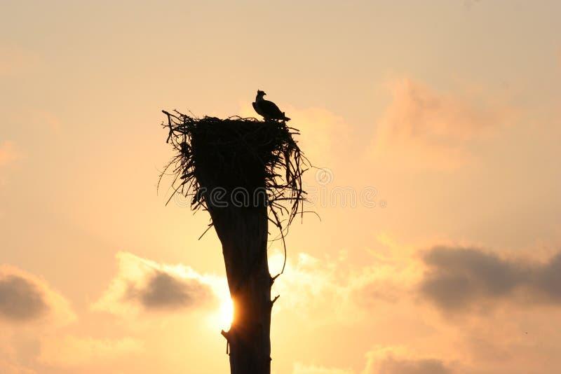 φωλιά s αετών στοκ φωτογραφία
