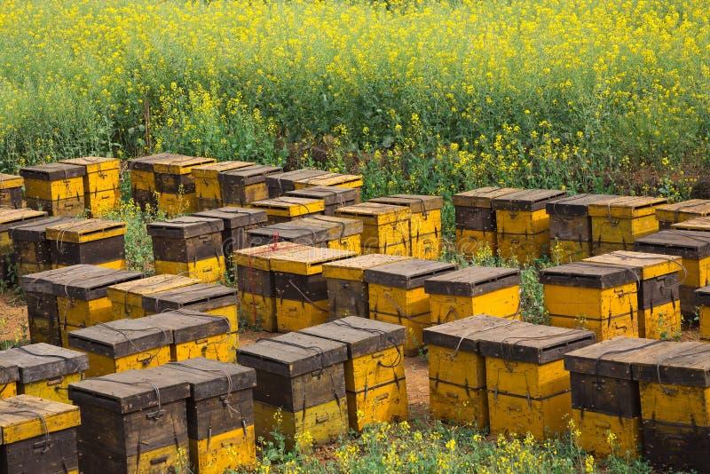 Φωλιές μελισσών σε έναν κήπο λουλουδιών στοκ φωτογραφία με δικαίωμα ελεύθερης χρήσης