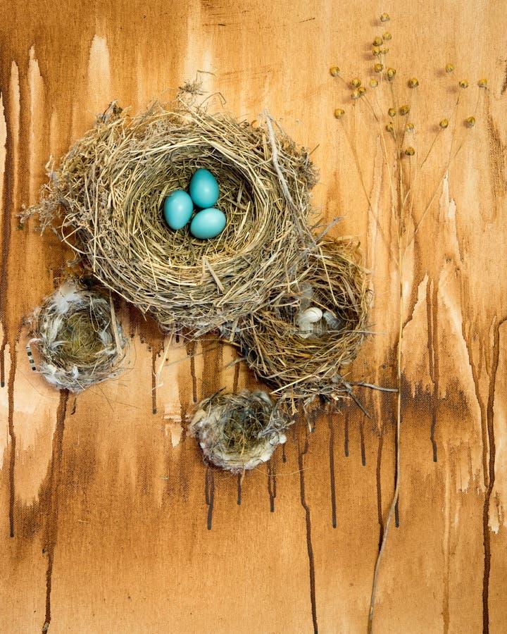 Φωλιές πουλιών με τα αυγά της Robin σε ένα υπόβαθρο grunge στοκ φωτογραφίες με δικαίωμα ελεύθερης χρήσης