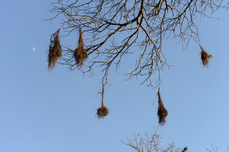 Φωλιές πουλιών στοκ φωτογραφίες