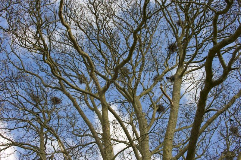 φωλιές πουλιών στοκ εικόνες