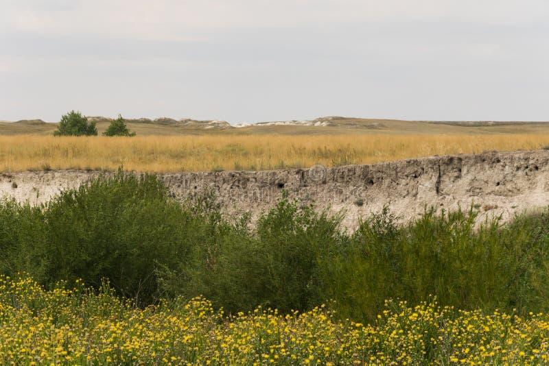 Φωλιές των κύψελλοων στο έδαφος στοκ φωτογραφία με δικαίωμα ελεύθερης χρήσης