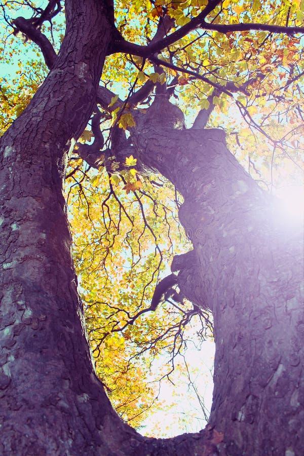 Φως δέντρων φθινοπώρου στοκ φωτογραφίες με δικαίωμα ελεύθερης χρήσης