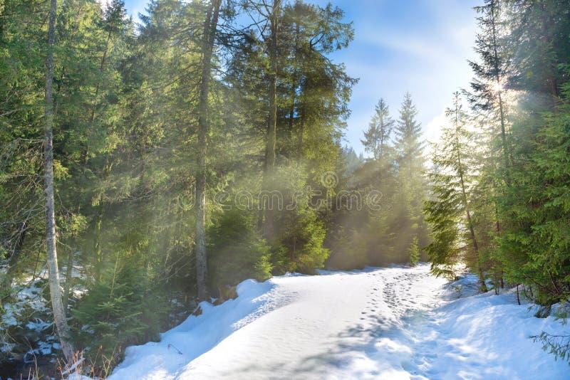 Φως ήλιων στο χειμερινό δάσος στοκ εικόνες με δικαίωμα ελεύθερης χρήσης