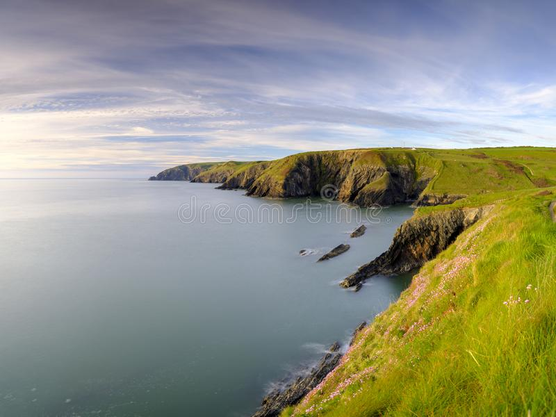 """Φως βραδιού άνοιξη Thrift """"pinks θάλασσας στον κόλπο Ceibwr, Pembroke, Ουαλία στοκ φωτογραφίες με δικαίωμα ελεύθερης χρήσης"""
