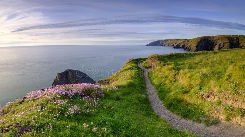 """Φως βραδιού άνοιξη Thrift """"pinks θάλασσας στον κόλπο Ceibwr, Pembroke, Ουαλία στοκ εικόνες"""