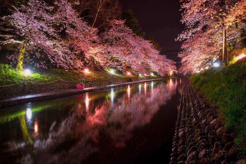 Φως επάνω για τα φωτισμένα δέντρα ανθών κερασιών στη νύχτα στοκ φωτογραφία