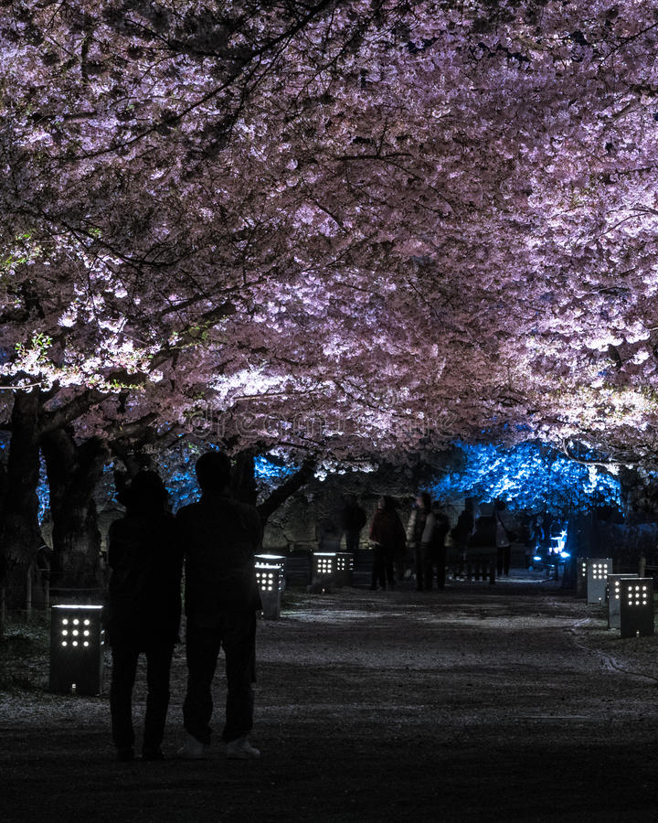 Φως επάνω του δέντρου ανθών κερασιών στο κάστρο Tsuruga Castle Aizu στοκ εικόνα με δικαίωμα ελεύθερης χρήσης