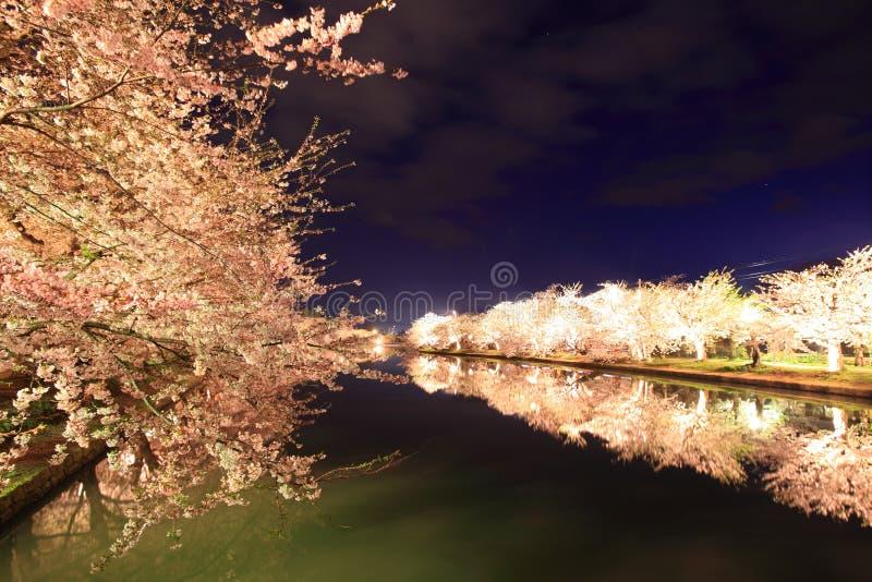 Φως επάνω του δέντρου κερασιών στοκ εικόνα