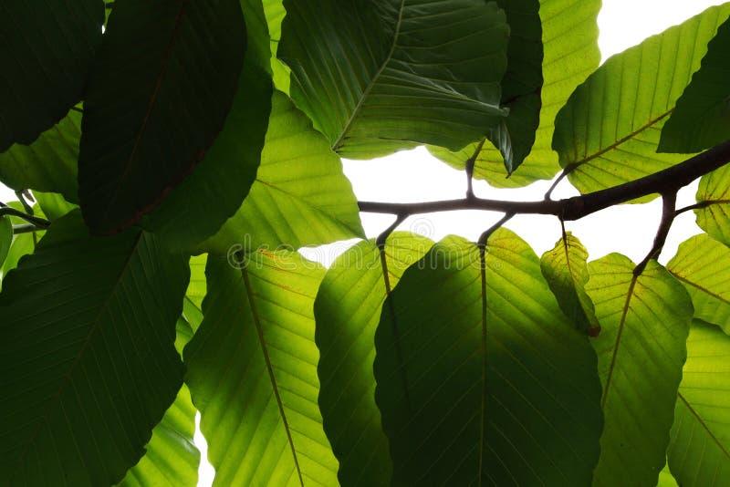 Φως και σκιά κάτω από τον πράσινο κλάδο Ov δέντρων φύλλων τροπικό στοκ εικόνες