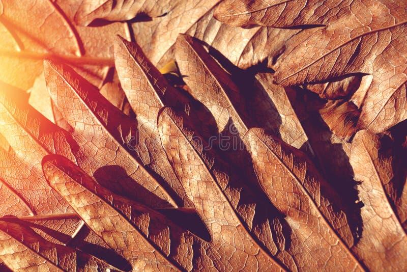 Φως και σύσταση σκιών των καφετιών ξηρών φύλλων στοκ φωτογραφία