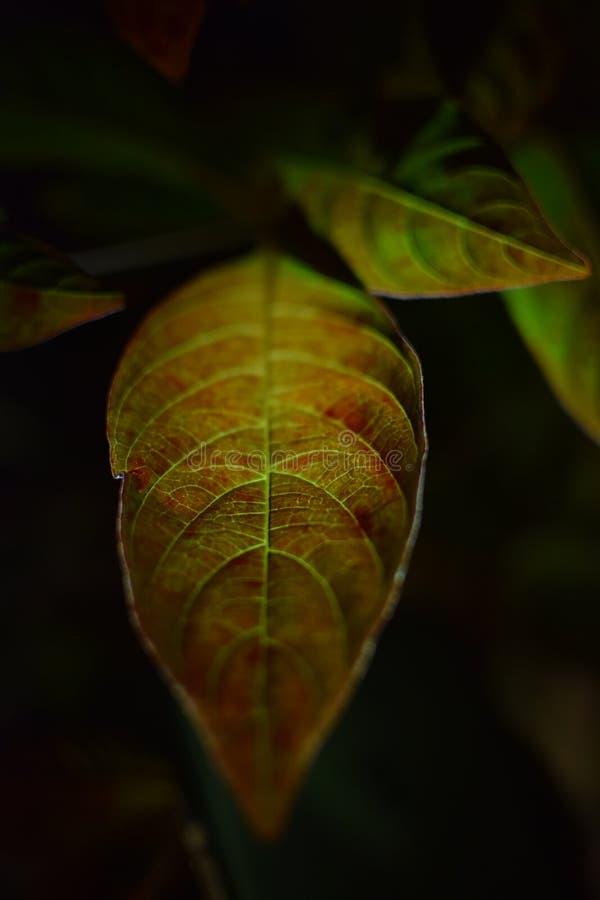 Φως λαμπτήρων στο φύλλο στοκ εικόνα με δικαίωμα ελεύθερης χρήσης