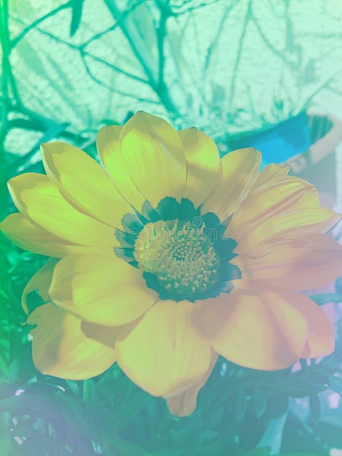 φως λουλουδιών ανασκόπησης playnig στοκ φωτογραφίες με δικαίωμα ελεύθερης χρήσης