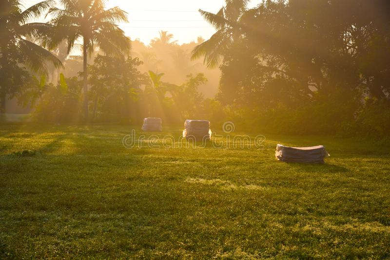 Φως πρωινού στο πάρκο στοκ φωτογραφία