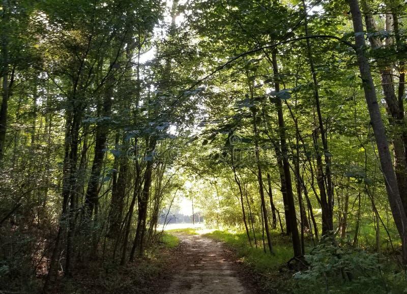 Φως στο τέλος της σήραγγας - πορεία μέσω των δασικών δέντρων με στοκ εικόνα