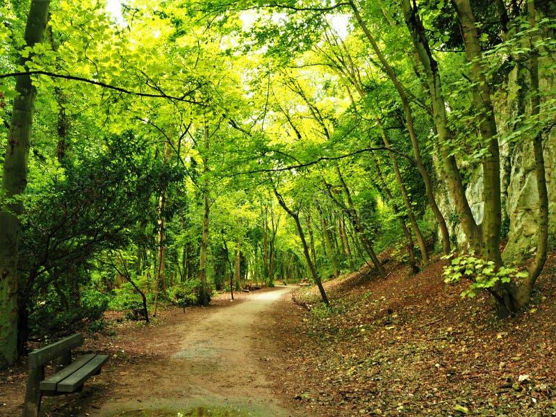 Φως του ήλιου που λάμπει μέσω των δέντρων στο πάρκο χώρας γεφυρών Humber, Γιορκσάιρ, Αγγλία στοκ φωτογραφία με δικαίωμα ελεύθερης χρήσης
