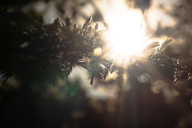 Φως του ήλιου που λάμπει μέσω των κλάδων στοκ εικόνες
