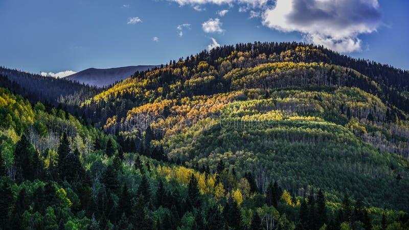 Φως του ήλιου στα δέντρα που αλλάζουν τα χρώματα στο βουνό στοκ εικόνες με δικαίωμα ελεύθερης χρήσης