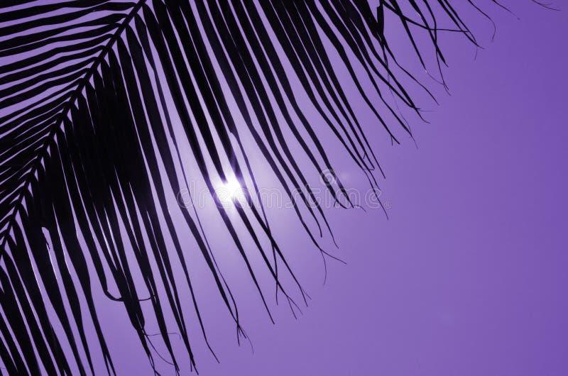Φως του ήλιου στον ιώδη ουρανό πίσω από τη μαύρη κουρτίνα φύλλων φοινικών στοκ φωτογραφία
