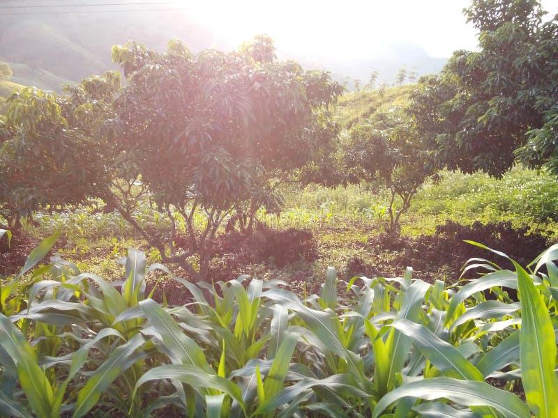Φως του ήλιου και δέντρο στοκ εικόνες