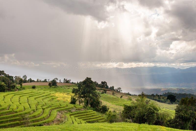 Φως του ήλιου με τον τομέα ρυζιού πεζουλιών στοκ φωτογραφίες