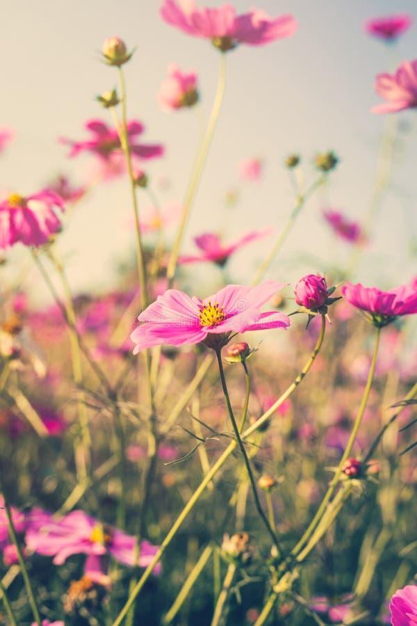Φως του ήλιου λουλουδιών και ουρανού κόσμου τομέων με το εκλεκτής ποιότητας φίλτρο στοκ φωτογραφίες
