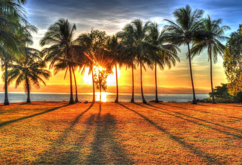 Φως του ήλιου που αυξάνεται πίσω από τους φοίνικες σε HDR, λιμένας Ντάγκλας, Αυστραλία στοκ εικόνες