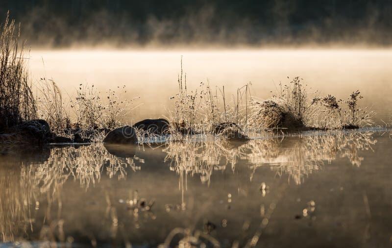 Φως του ήλιου που καίγεται ντυμένους στους παγετός βράχους και τη χλόη στην άκρη του νερού κατεψυγμένος αεροπορικώς τη νύχτα του  στοκ φωτογραφία με δικαίωμα ελεύθερης χρήσης