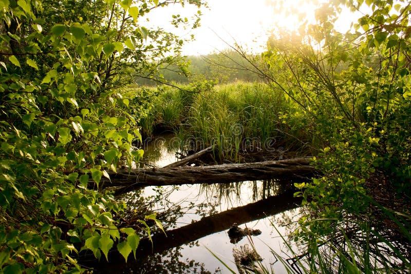Φως του ήλιου πρωινού πέρα από το ρεύμα και το λιβάδι στο εθνικό πάρκο Acadia στοκ φωτογραφία με δικαίωμα ελεύθερης χρήσης