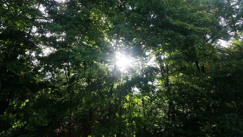 Φως του Ιησού μεταξύ των δέντρων στοκ εικόνες με δικαίωμα ελεύθερης χρήσης