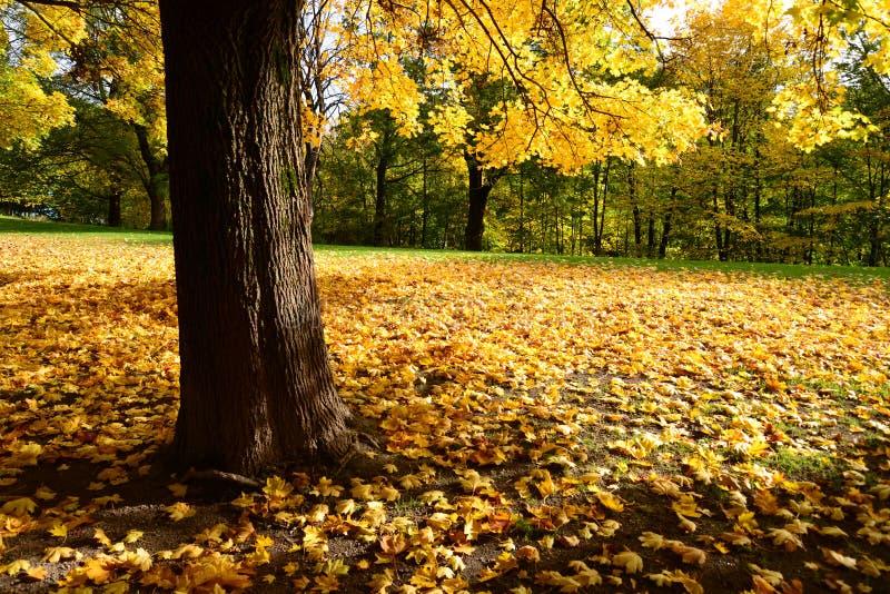 Φως φθινοπώρου στοκ φωτογραφίες