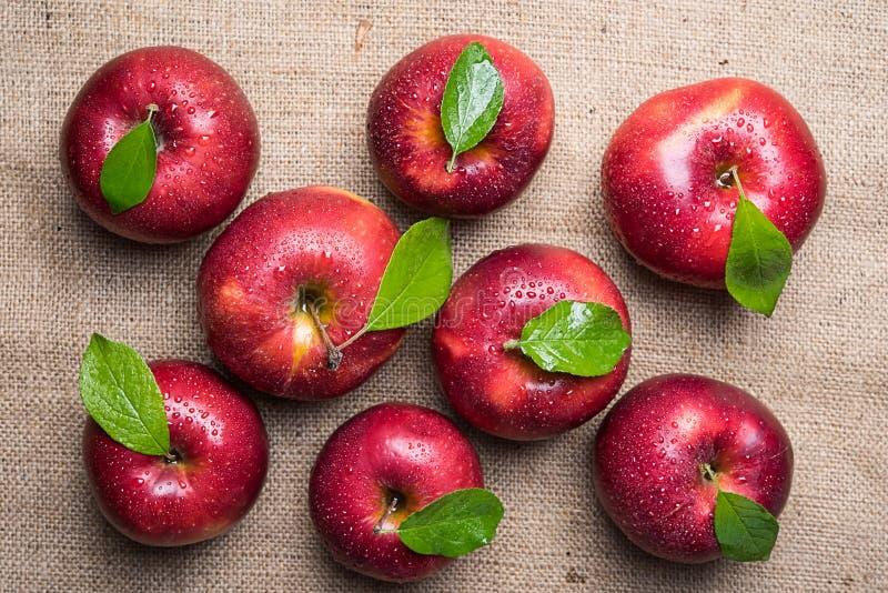 Φωτεινά λαμπρά υγρά κόκκινα μήλα με τα πράσινα φύλλα και τις πτώσεις νερού επάνω στοκ εικόνες