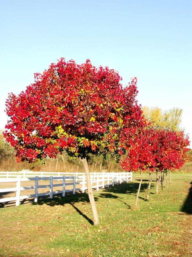 φωτεινά δέντρα Στοκ εικόνες με δικαίωμα ελεύθερης χρήσης