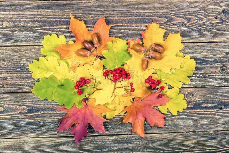 Φωτεινά κίτρινα φύλλα, βελανίδια και σορβιά φθινοπώρου σε ένα ξύλινο backgr στοκ εικόνα
