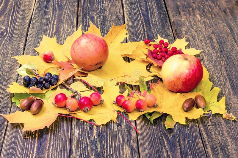 Φωτεινά κίτρινα φύλλα, μήλα, βελανίδια και σορβιά φθινοπώρου σε ένα woode στοκ εικόνα με δικαίωμα ελεύθερης χρήσης