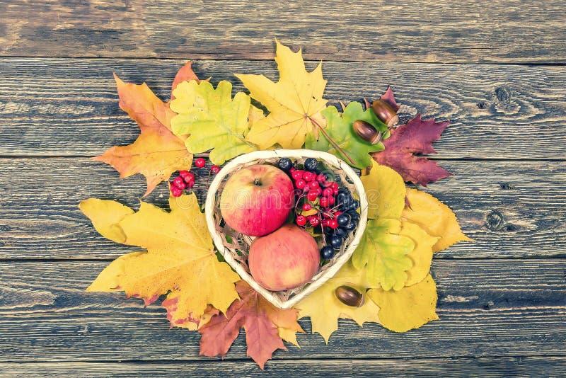 Φωτεινά κίτρινα φύλλα, μήλα, βελανίδια και σορβιά φθινοπώρου σε ένα woode στοκ φωτογραφίες με δικαίωμα ελεύθερης χρήσης