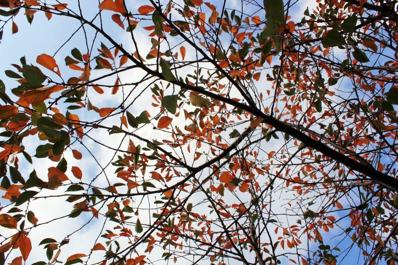 Φωτεινά κιτρινοπράσινα φύλλα σε έναν κλάδο δέντρων, χρώματα φθινοπώρου στοκ φωτογραφίες